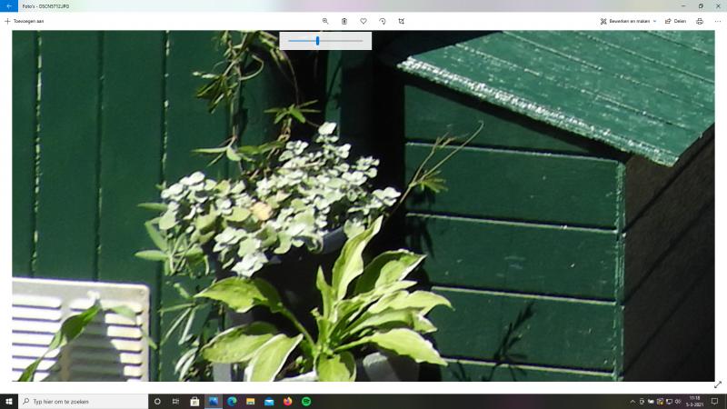 niet de hosta, niet de passiebloem,maar grijs fluwelig plantje inhet midden???
