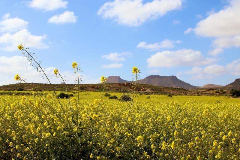 gele planten in tunesië