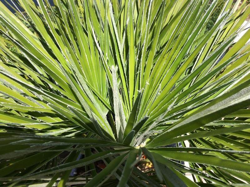 Schimmel in palm
