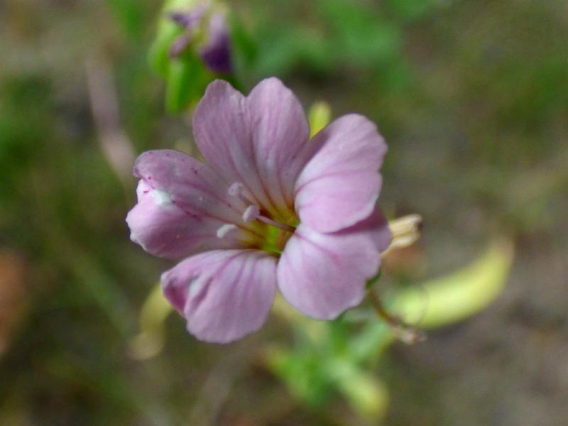 Foto 1: bloem
