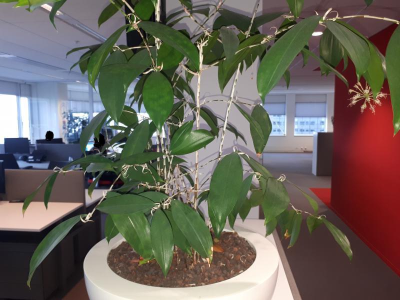 de onbekende plant