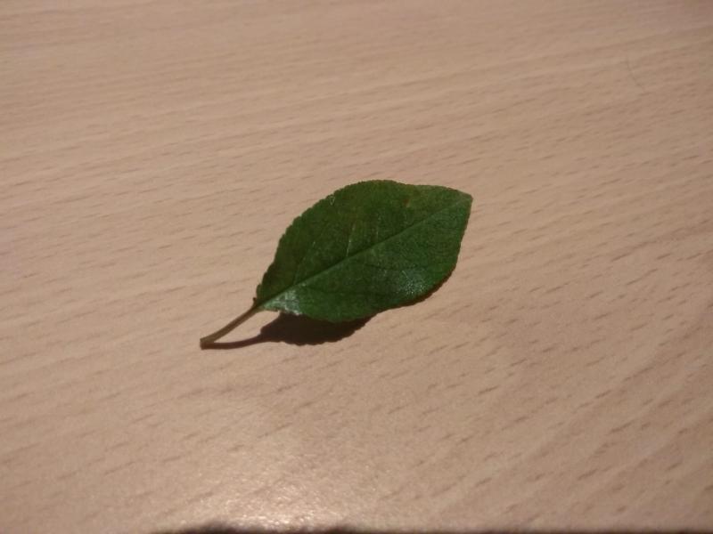 blaadje van de boom