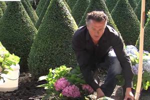Embedded thumbnail for Hoe plant ik een Hortensia?