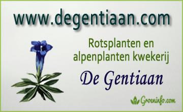 kwekerij de gentiaan